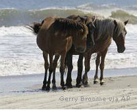 Save the Wild Horses of Corolla