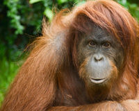 Stop Deforestation for Palm Oil in Everyday Products