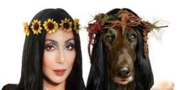 Send thanks to Cher for promoting Sochi dog rescue efforts
