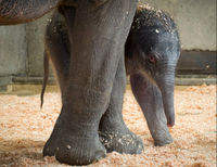 Tell Oregon Zoo to End its Harmful Elephant Breeding Program