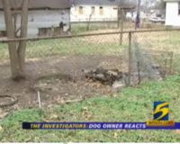 Mimi's remains are still in the yard where she was set on fire while giving birth to puppies.