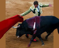Tell Coca-Cola to Stop Supporting Bullfighting