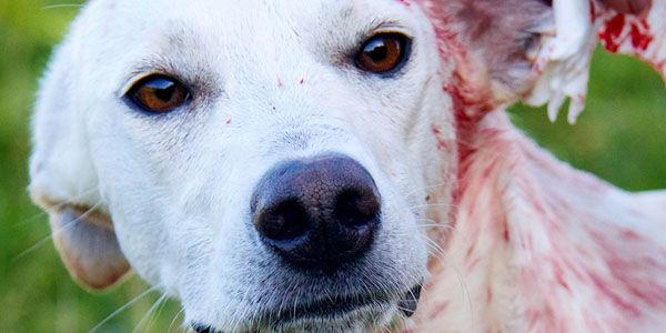 The Chinese want permission to market dog meat in the USA for