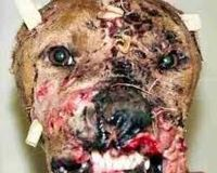 FIGHT AGAINST DOGFIGHTING