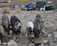 UPDATE! Help Stop Desert Dog Death Camp