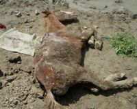 Stop Abuse Against 'Brick Donkeys' in Nepal