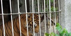 Ban Exotic Animals in North Carolina