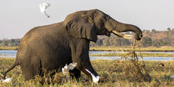 Massive loss of elephants in the Mara Serengeti ecosystem