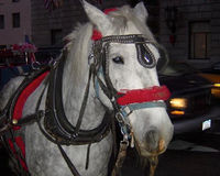 Tell NYC to Retire Carriage Horses to Sanctuary