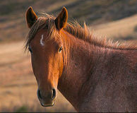Stop Horse Slaughter Factory in Missouri