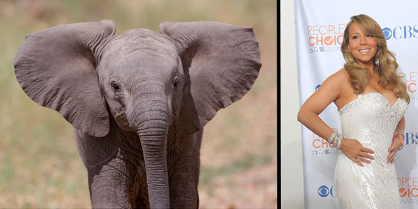 Mariah Carey: Don't Traumatize Baby Elephants and White Tigers for Your Dream Wedding