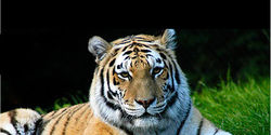 Save Critical Tiger Reserve