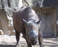 BLACK RHINO SHOULD BE GETTING BETTER PLACE OR SEND SOLDIERS THERE NOT INTO WARS