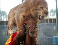 HOPE FOR HORSE MADE TO CARRY LION