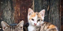 Provide 27 Humane Traps To Help Feral Cats