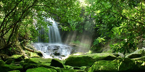 Help Me Protect Our Rainforests