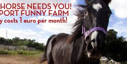 Help us keep the Funny Farm Horse Sanctuary moving forward!
