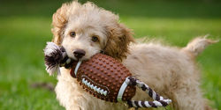Tell the National Football League Foundation to stop lethal experiments on animals!