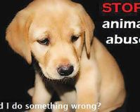 Animal Cruelty - Change The Law Now