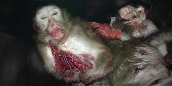 Stop Animal abuse, breeding of animals within their own genes, vivisection (animal experiments)