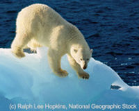 Protect Polar Bears From Global Warming