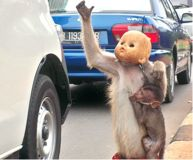 Stop the Abuse of Macaque Monkeys in Indonesia