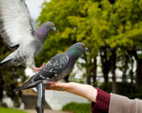 Ask the Queen to Stop Supporting Pigeon Racing!