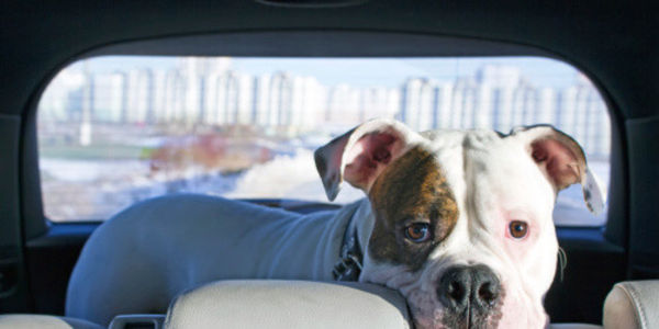 Kroger: Do More to Help Pets Left in Hot Cars!