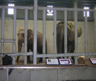 Send Kansas Zoo Elephants to Sanctuary