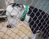 Help Stop Euthanasia, Limit Breeding and Pet Sales in Hillsborough County