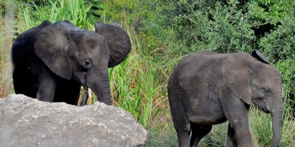 Enforce Stronger Forces Against Elephant And Rhino Poaching in Zimbabwe and Tanzania