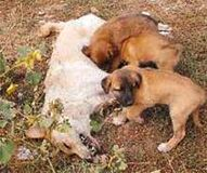 Stray Animals in Turkey How can a law be enforced if the violation of it is not prosecuted?