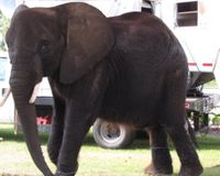 Will You Help Nosey?