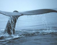 Tell NOAA: Expand California Sanctuaries for Whales, Seabirds, and Turtles
