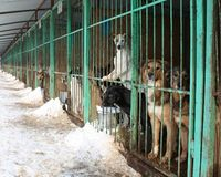 STOP RUSSIA!! from legislating CONCENTRATION CAMPS for stray cats and dogs.
