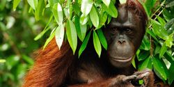 URGENT CALL FOR ACTION 4 days to save beyond 1.2 million hectares of forest in Sumatra