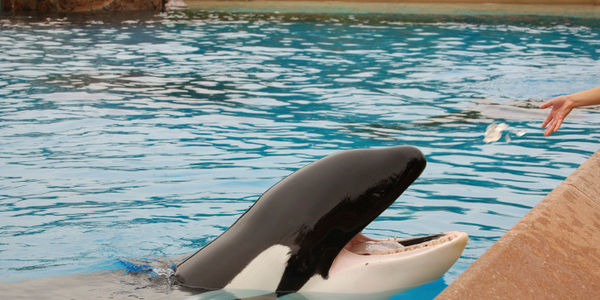 Ask the New York Times to Reject SeaWorld Propaganda