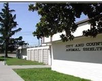 Remove Pat Claerbout from San Joaquin Animal Shelter