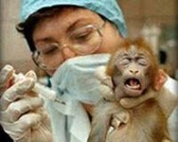 Ban Animal Experimentation in the United States