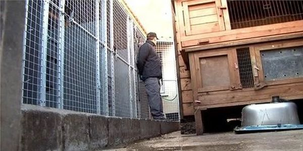 Demand a Custodial Sentence for those Guilty of Animal Cruelty Offences in Northern Ireland