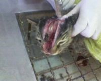 Cruelty with Feral Cats and Dogs in Iran