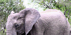 Stop the International Ivory Trade