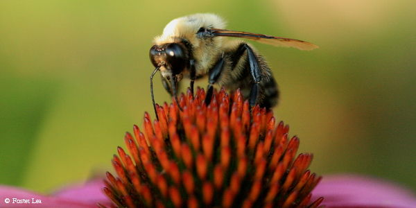 Urge the EPA to Save Bees