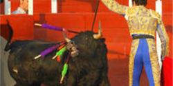 Stop Bullfighting in Mexico