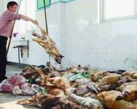 Cruel China: Stop the Chinese cruelty to Animals