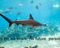 End the selling sharkfin and shark products online.