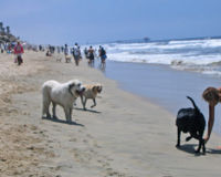 Allow the City of Santa Monica to create a pilot dog beach