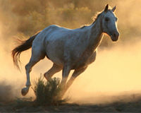BLM: Don't Kill Our Wild Horses