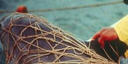 Extend Protections for Critically Endangered Vaquita Porpoises