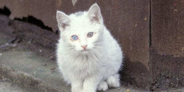 Cancel Austrailias Plan To Kill Millions Of Ferral Cats!!